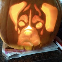 boxer-pumpkin-3